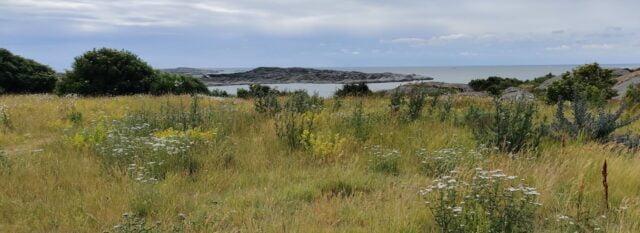 Ängsmark och slåtteräng
